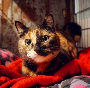 gattile treviso elezioni comunali movimento5stelle